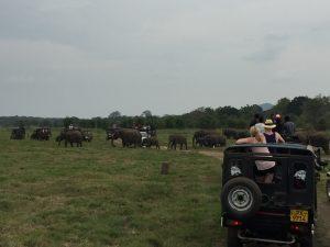 3. Tag: Nach 6 Uhr kommen die wilden Elefanten